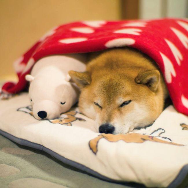 Животные-звезды социальных сетей (11 фото)