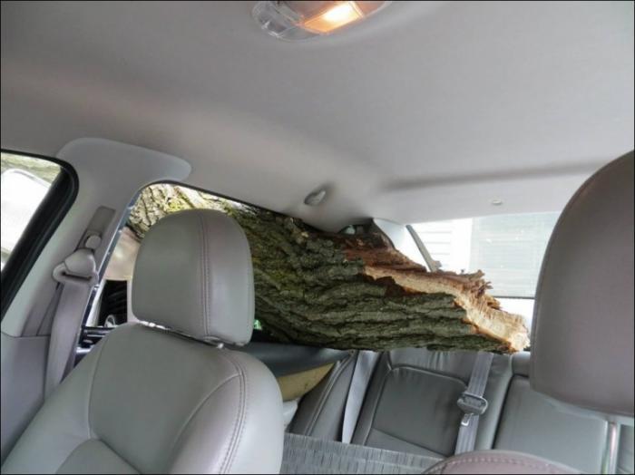 Дерево, забор и две машины - богатый улов для одного ДТП (10 фото)