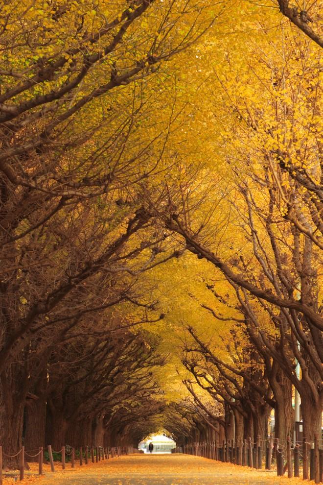 Природные и рукотворные поразительные аллеи (20 фото)