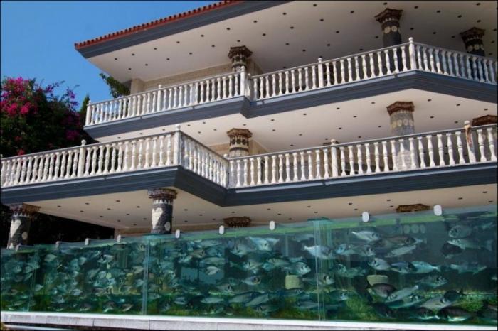 Забор в виде аквариума (4 фото)