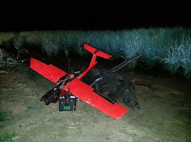 Летающие дроны - новое слово в отстреле кабанов (9 фото)