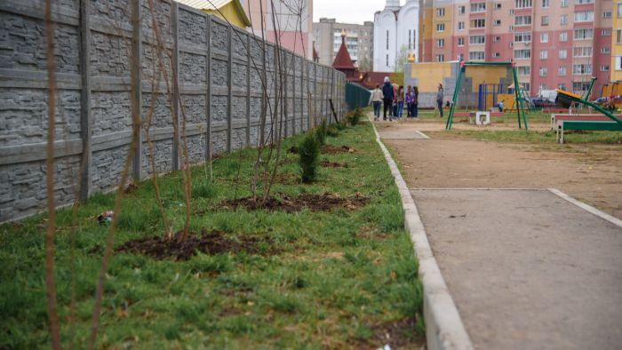 В Иваново украли саженцы «Аллеи славы», высаженные к 9 мая (5 фото)