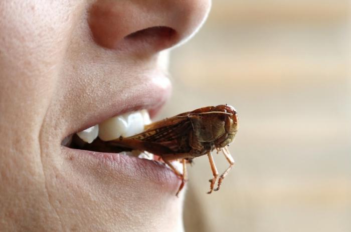 Жареная саранча как источник витаминов и белка (8 фото)