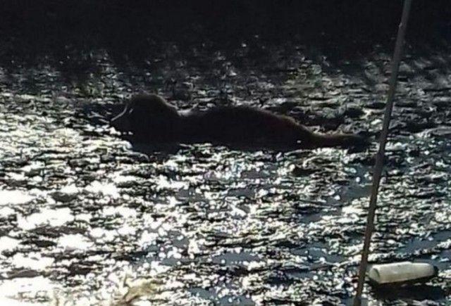 Жительницы Приморья спасли застрявшую в болоте собаку (4 фото)