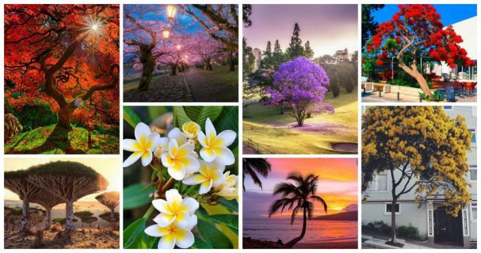 Самые фотогеничные деревья, которые очаруют своей красотой (28 фото)