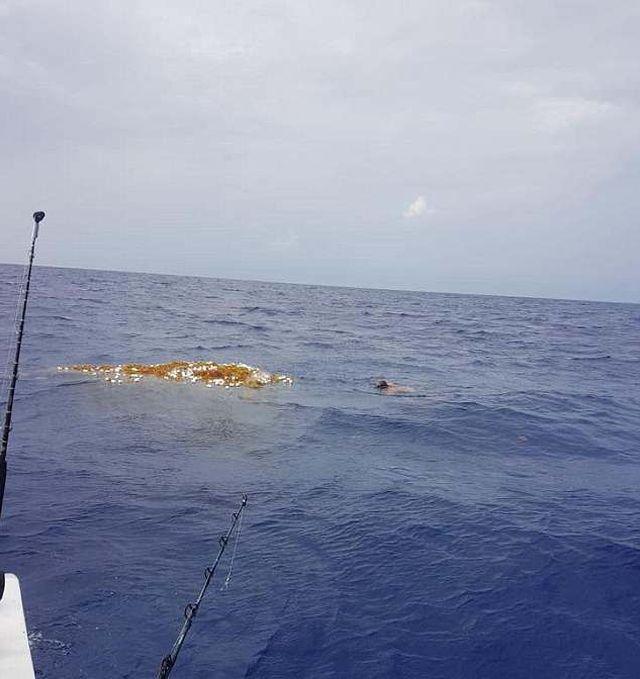 Дайвер обнаружил потерянную рыболовную сеть (4 фото)