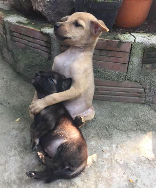 Щенки учат людей заботиться друг о друге на своем примере (5 фото)