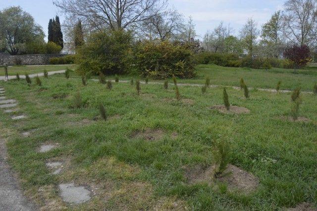 Похищение деревьев с аллеи в память о жертвах  в Кемерово (3 фото)