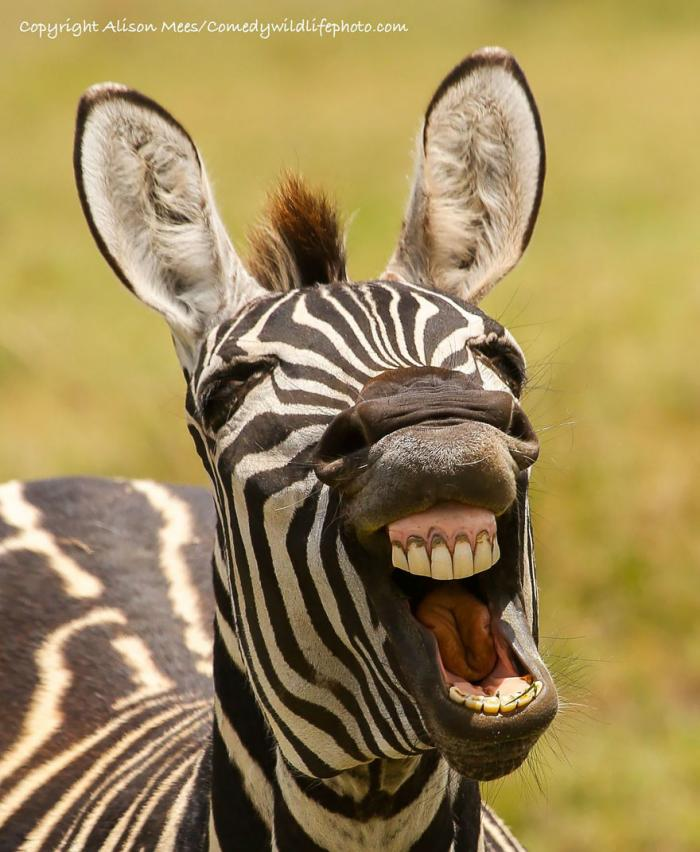Фотошедевра конкурса Comedy Wildlife Photography Awards (22 фото)