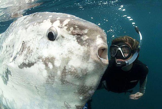 Луна-рыба - рыба, которой удается выживать (13 фото)