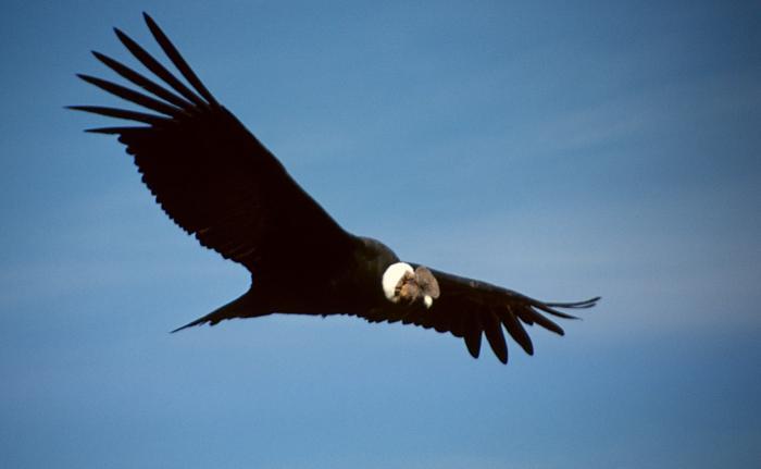 Самые большие хищные птицы (8 фото)