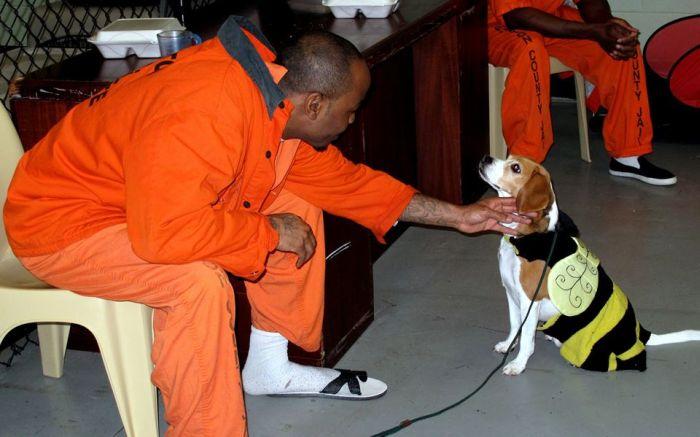 В американской тюрьме заключенные воспитывают бездомных собак (7 фото)
